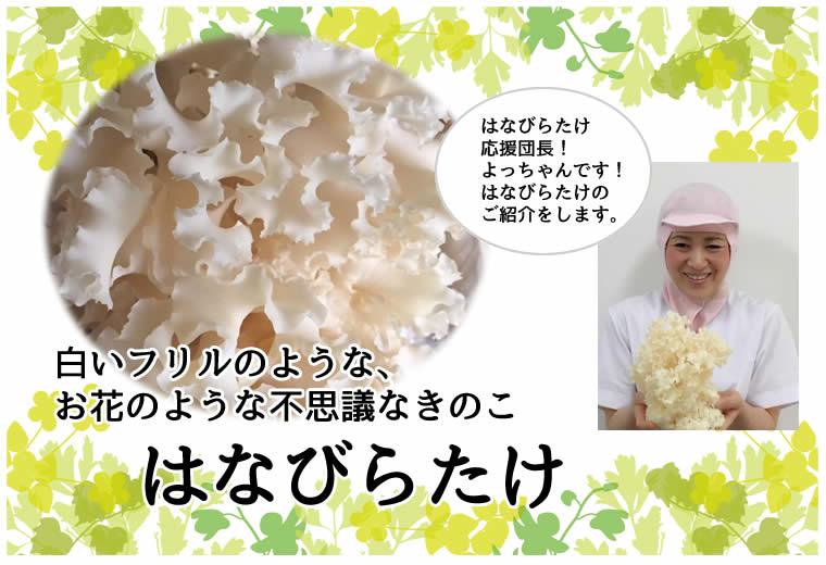 白いフリルのような、 お花のような不思議なきのこ はなびらたけ